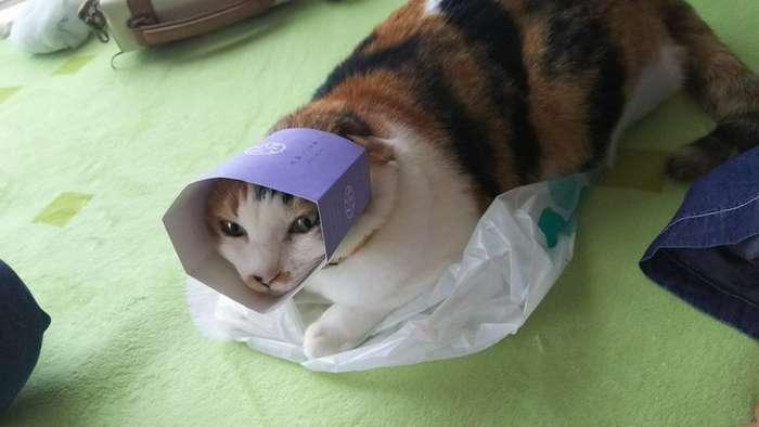 В японском твиттере прошёл чемпионат упоротых животных в категориях -кисики- и -пёси--18 фото-