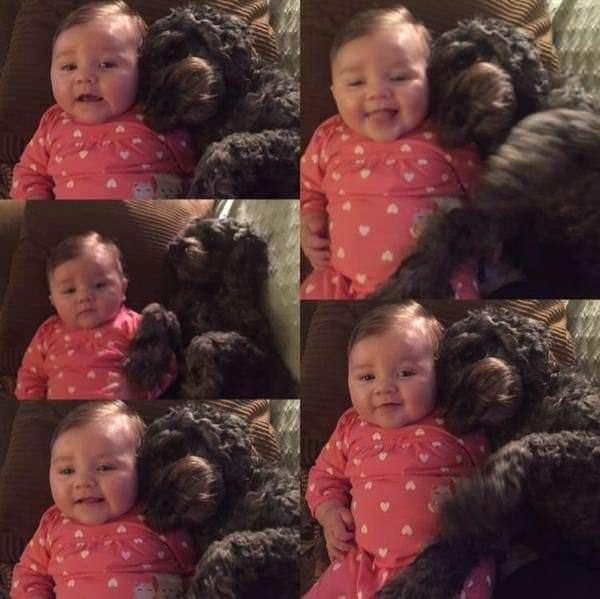 В горящем доме осталась 8-МЕСЯЧНАЯ девочка, тогда верный пес бросился прямо в огонь…-5 фото + 1 видео-