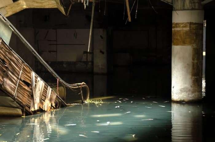 Тайна заброшенного и -захваченного- рыбой торгового центра-4 фото-