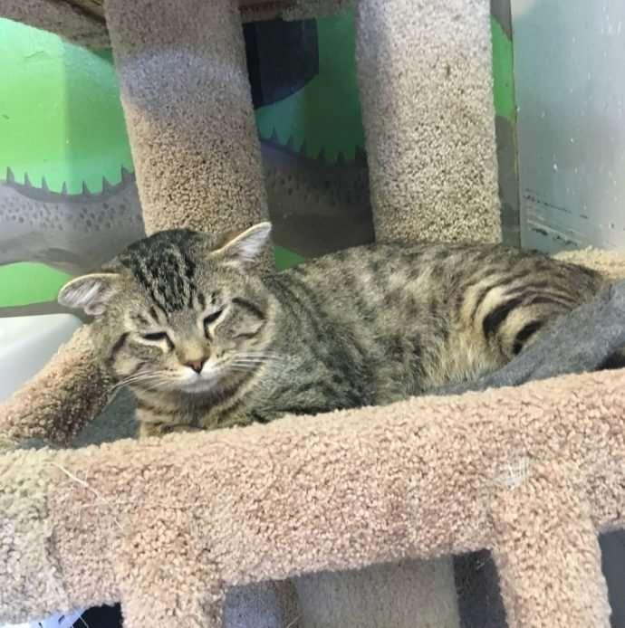 Приютский застенчивый кот спрятался от посетителей,но его нашли и усыновили-5 фото-