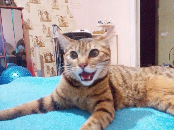 Одной семье повезло с котом-5 фото-