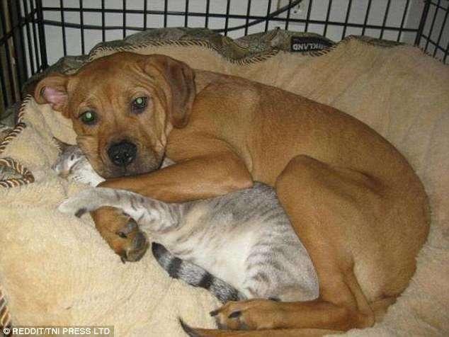 Кошки и собаки под одной крышей: 15 милейших фотографий-16 фото-