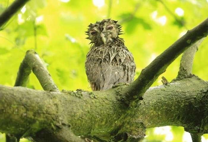 5 фото мокрых птенцов неясыти, которые поднимут настроение каждому-5 фото-