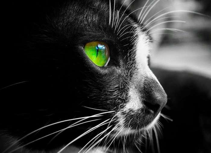 Как вы ошибаетесь насчёт кошачьих глаз-15 фото-