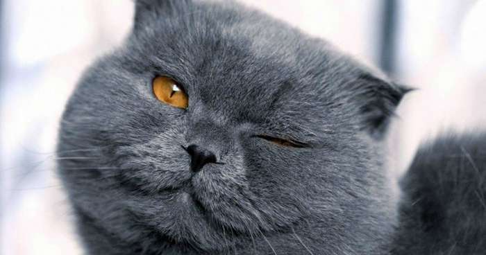 Кошачья морда-1 фото-