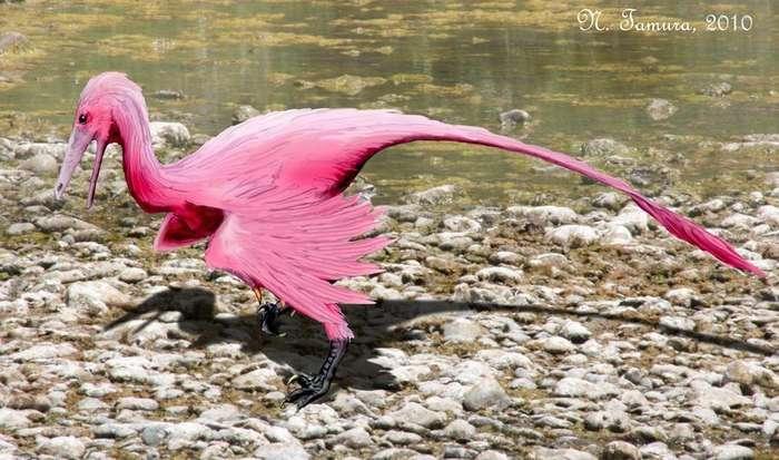 Интересные факты про Южную Америку. Часть вторая - палеонтология -рептилии--33 фото + 1 гиф-