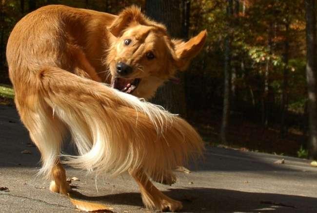 Почему собаки делают эти странные вещи, откоторых хочется провалиться сквозь землю