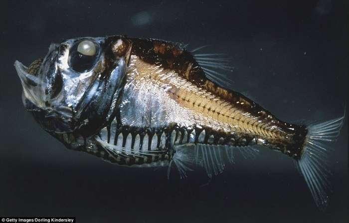 Подводный мир: самые странные обитатели океана-18 фото-