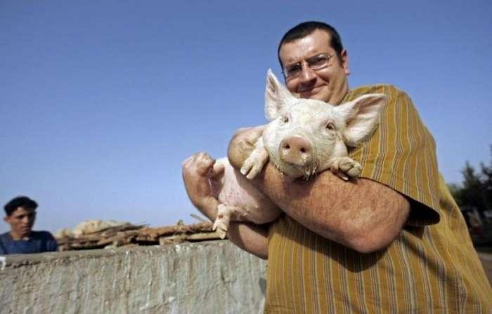В чём истинная причина того, что арабы и евреи не едят свинину?-8 фото + 1 видео-