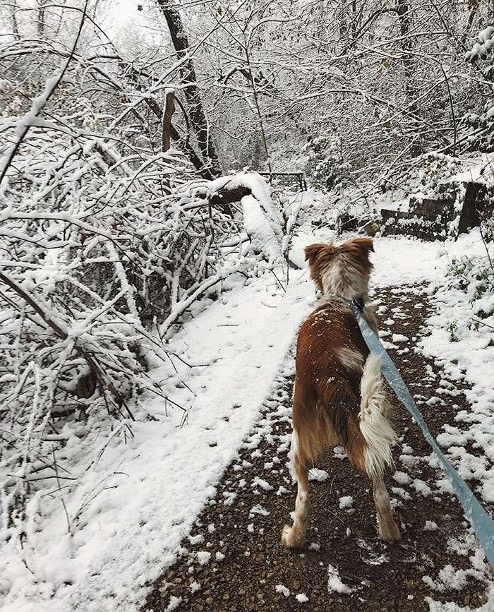 Девушка забрала пса из приюта, и теперь его счастью нет предела-6 фото-