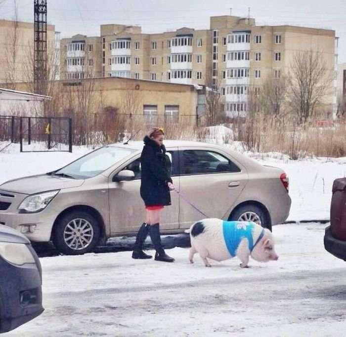 Городские сумасшедшие: любой незнакомец может оказаться чудиком-17 фото-