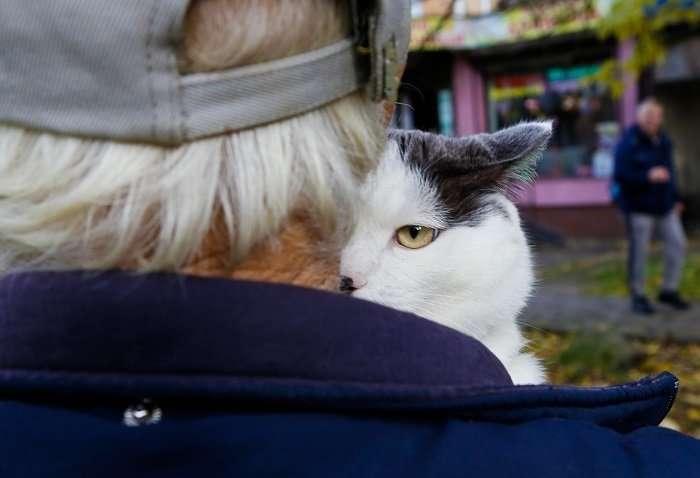 За этого кота предлагали 450 тысяч рублей-11 фото-