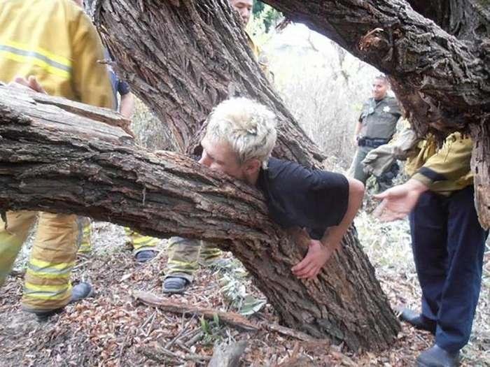 Проголодались: пугающие снимки деревьев, поглощающих все вокруг-23 фото-