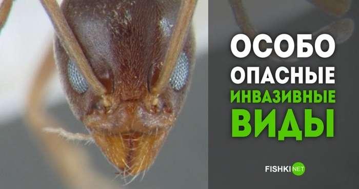 Биологическое разнообразие? Неа, не слышали! 15 самых опасных инвазивных видов животных-15 фото-