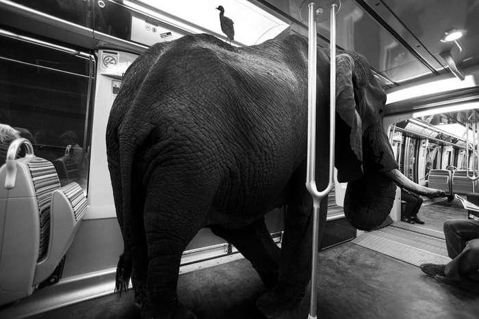 Хамству бой, или Чему рукоплескал весь вагон метро-3 фото-