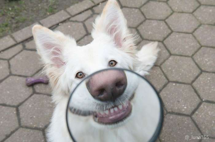 Улыбайки от собак!-24 фото-