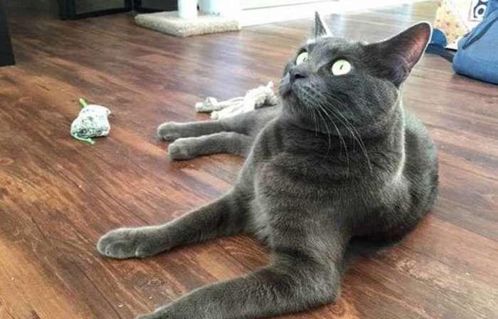 Этим котикам валерьянки больше не наливать!-23 фото-