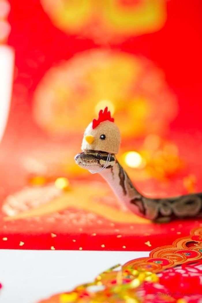 35 восхитительных фотографий, которые помогут вам побороть страх перед змеями-32 фото + 3 гиф-