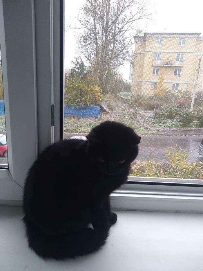 """""""В этом доме кота не будет!"""", – сказал отец. Но однажды вся семья отправилась в парикмахерскую-3 фото-"""