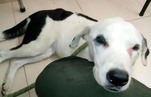 Собака умерла из-за 'разбитого сердца' после того, как владелец бросил её в аэропорту-5 фото-