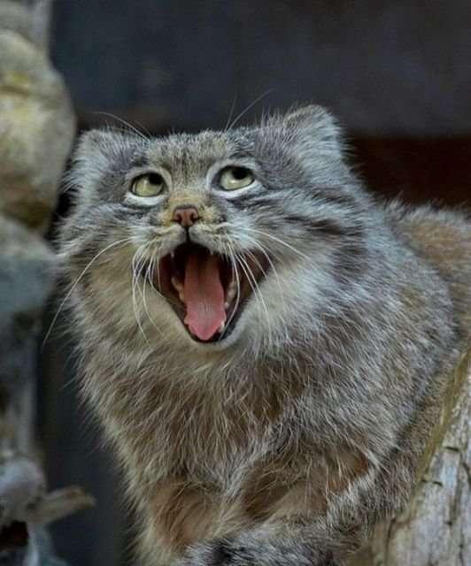 Неудачные фото животных-32 фото-