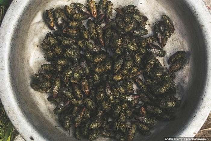 Что едят люди в Азии. Самая отвратительная еда в мире-10 фото-