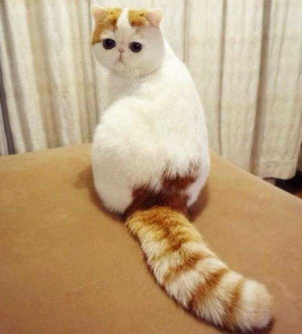 5 самых знаменитых котов-21 фото-