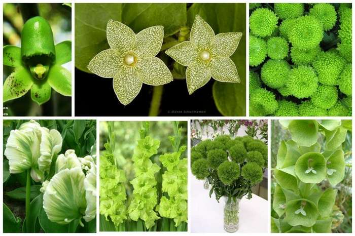 Цветы - как листья, листья - как цветы-20 фото-