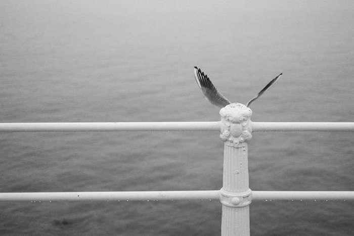 Сверхъестественные совпадения в природе от Дениса Черима-25 фото-