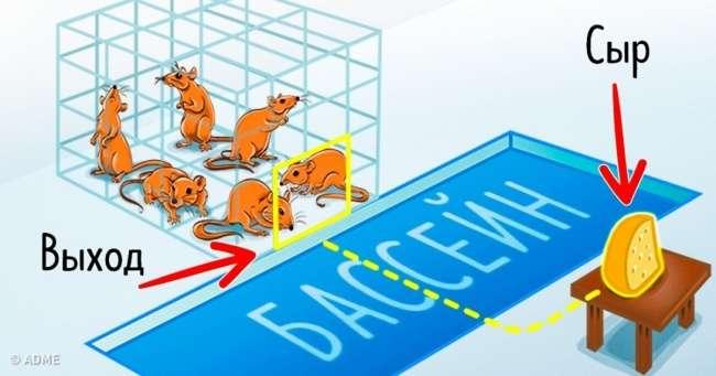 Удивительный эксперимент накрысах, который наглядно показал, как ведут себя люди