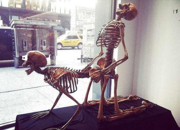 -Половой акт прерван по причине смерти участников- или самые безумные смерти во время секса
