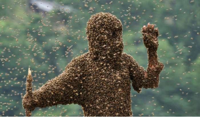 Самые масштабные нашествия насекомых в истории