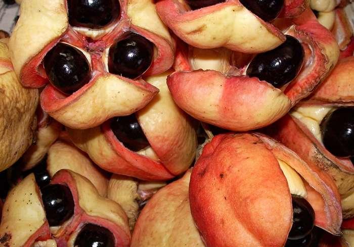 Экзотические продукты и блюда, которые могли бы вас убить