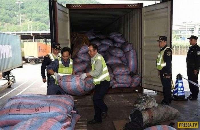 12 тонн чешуи панголинов - крупнейшая партия контрабанды задержана китайскими таможенниками (7 фото)