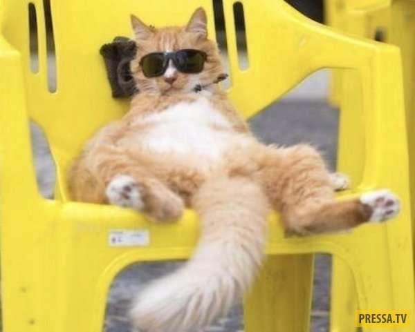 Прикольные фотографии с котами и кошками (31 фото)