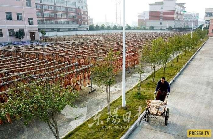 """""""Солнечное запекание"""" китайского хамона (10 фото)"""