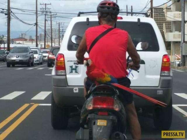 Как они получают свои водительские права ?!(40 фото)