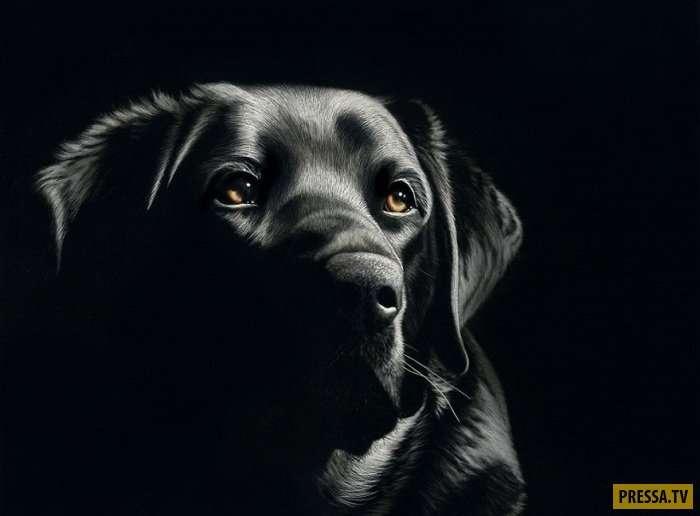Никакой кисти и палитры! Необычные картины Кэти Шитер, созданные техникой царапания (20 фото)