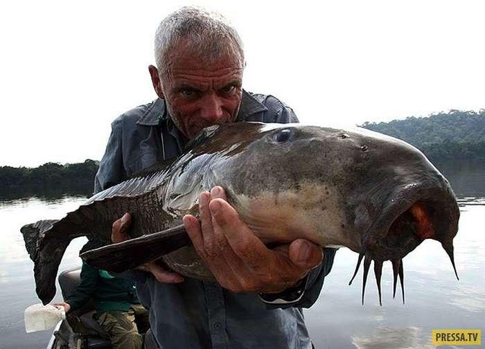 """""""Рыбки"""" - страшилища, которые живут в реках (22 фото)"""