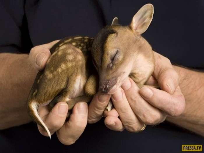 Они родились... Забавные детеныши животных (27 фото)