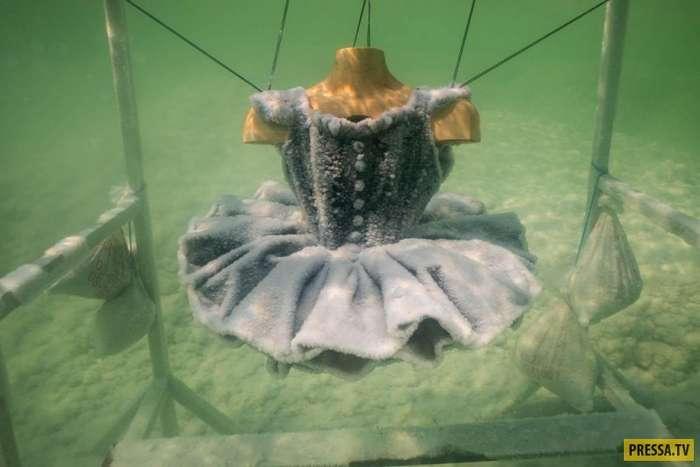Художница погружает предметы в Мертвое море, и с ними происходит невероятное (10 фото)