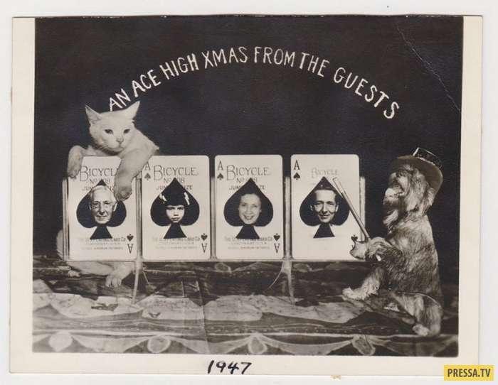 WTF?! Старинные рождественские открытки с домашними питомцами (15 фото)