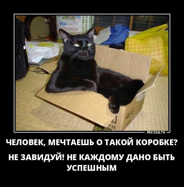 Новые смешные демотиваторы (47 фото)