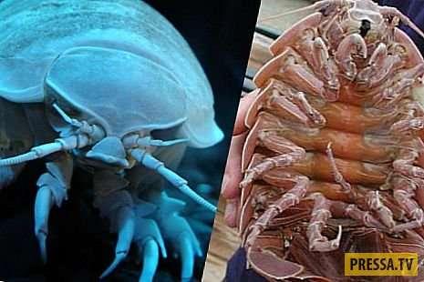 Топ 12: Самые ужасные существа на Земле (12 фото)