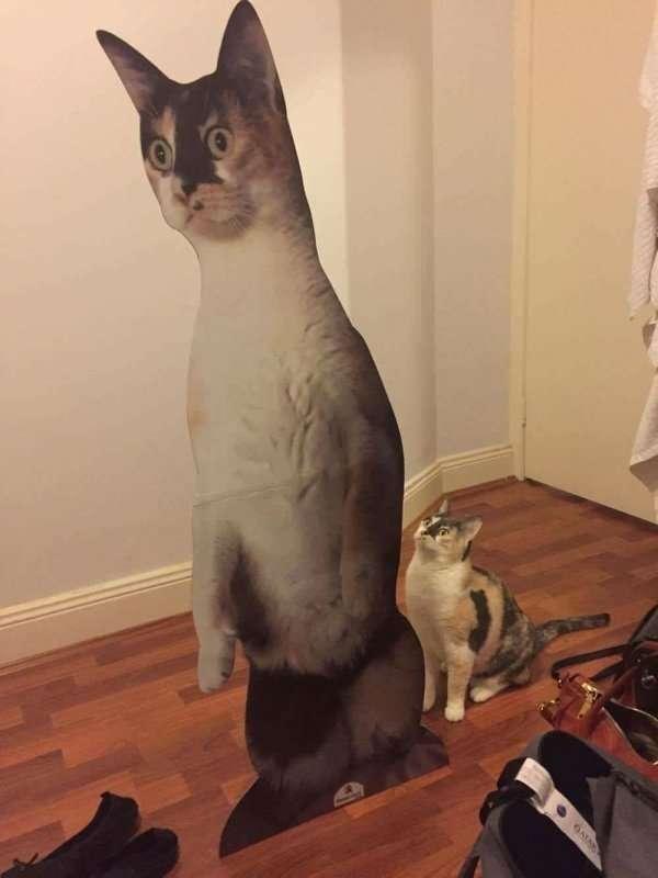 Забавные фотографии с котами (70 фото)