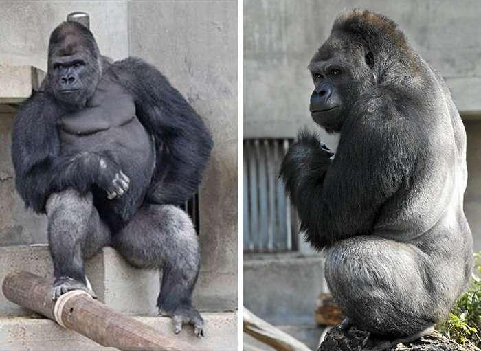 Этот сексуальный мачо стал звездой японского зоопарка! (15 фото)