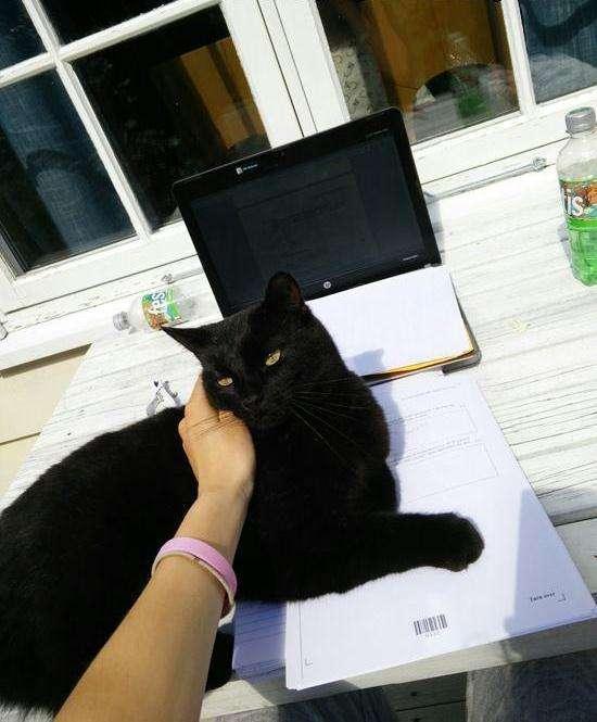 Эта кошка пропадала целыми днями. Загадка открылась, когда однажды с ней передали записку…