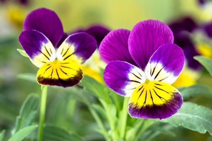 Гороскоп счастливых растений по знаку зодиака. Они принесут вамудачу!