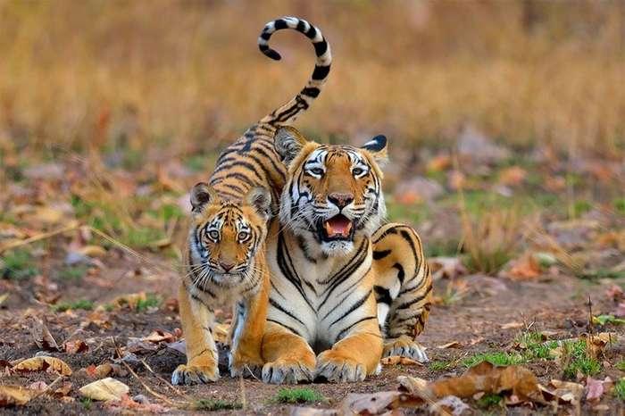 Лучшие фото о природе-15 фото-