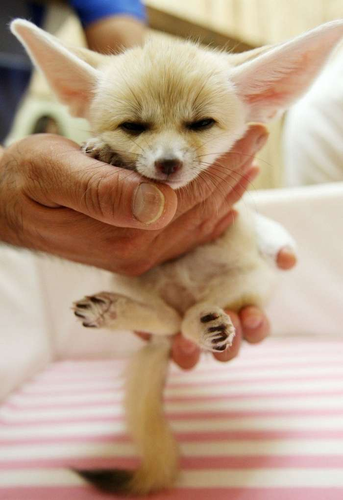 15 крошечных животных, которые помещаются на ладошке-15 фото-